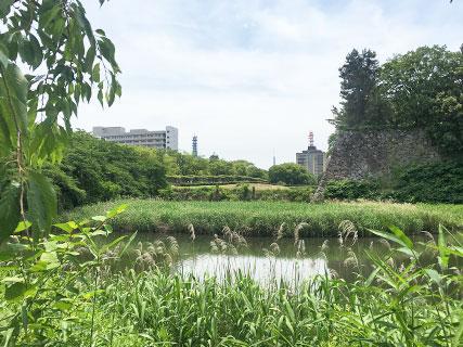 名古屋城 水堀 空堀