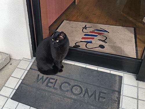 牛久保 看板猫 黒猫